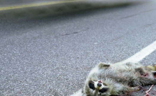 Background-roadkill