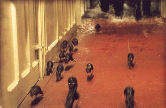 Rats-Running-Titanic-1