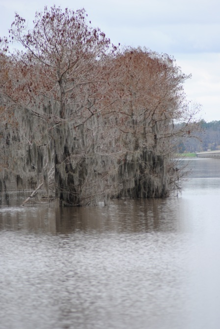Lake Bistineau Louisiana
